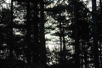 Dark Forrest van Erwin Delsman
