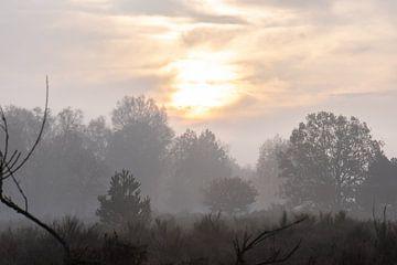nebliger Morgen auf der Heide von Tania Perneel