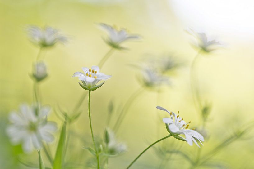 Spring van Teuni's Dreams of Reality