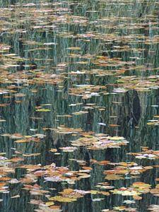 Blätter auf dem Wasser