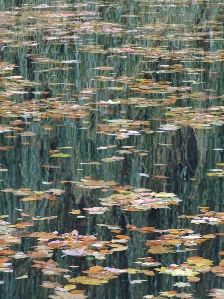 Blätter auf dem Wasser von -  BIMBO  -