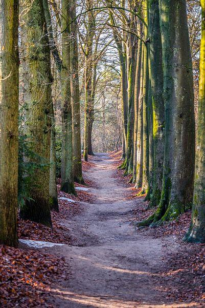 Waldweg von Fred Leeflang