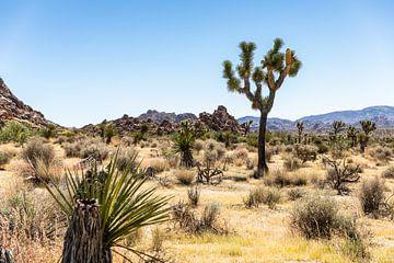 Joshua Tree National park. van Martijn Bravenboer