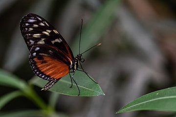 Schmetterling von Eerensfotografie Renate Eerens