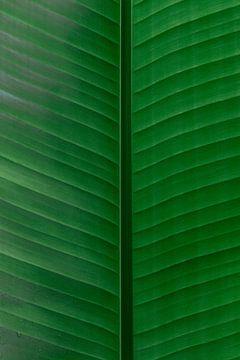 Leuchtend grüne Blätter von Simone Neeling