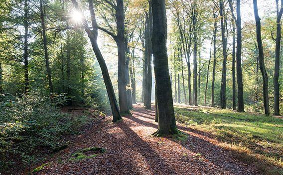 De herfst zon schijnt door de bomen