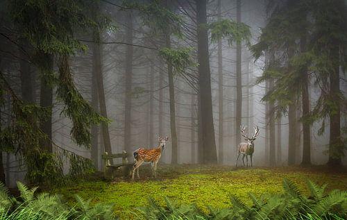 twee herten in de ochtend