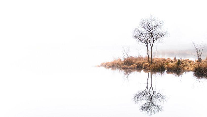 Twin trees Pano #1 van Lex Schulte