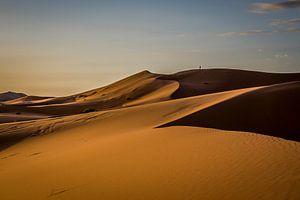 Ochtendzon in de woestijn van