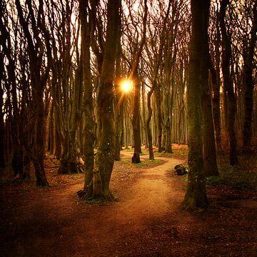 Sonnenaufgang im Gespensterwald sur Heike Hultsch