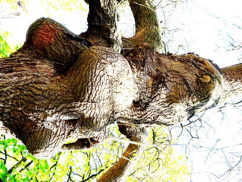 Tree Magic 126