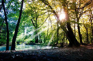 De ondergaande zon in het bos van Hanneke van Buuren