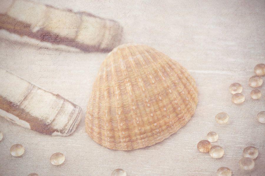 Sea Shells.. van LHJB Photography