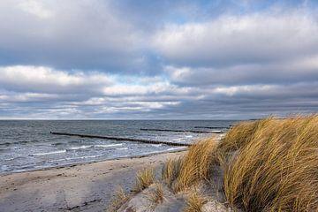 Épis sur la côte de la mer Baltique à Fischland-Darß