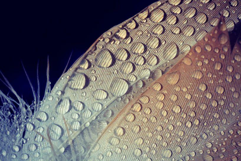 drops on feathers...  van Els Fonteine