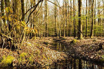 Beek door het bos van Tony Buijse