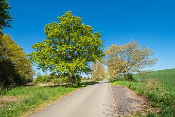Landschap met weg en bomen in de buurt van Kuchelmiß van Rico Ködder