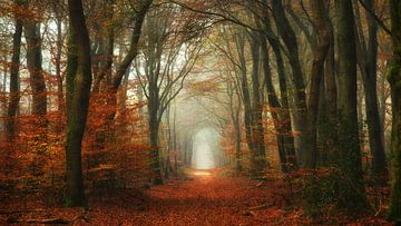 Forêt classique sur Lars van de Goor