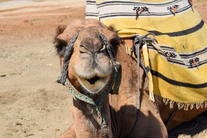 Niedliches Kamel von Sama Apkar