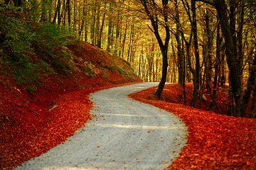 Die Straße von Ilija Stanusic