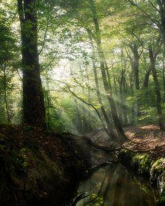 Sprookjes bos van Jelmer Reyntjes