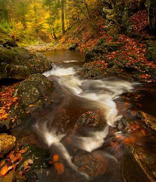 Volop herfst aan de rivier de Getzbach in de Hoge Venen in de Ardennen. van Jos Pannekoek