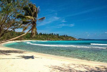 Traumstrand Anse Cocos  - La Digue - Seychellen von Max Steinwald