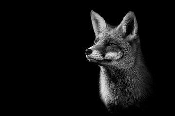 Fuchs in Schwarz und Weiß von Elles Rijsdijk