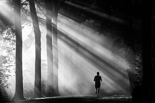 Courir à travers les rayons du soleil sur le domaine d'Amelisweerd