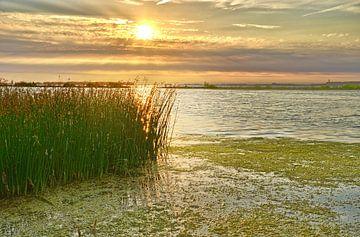 Rohrblatt am Sonnenuntergang von Frans Blok