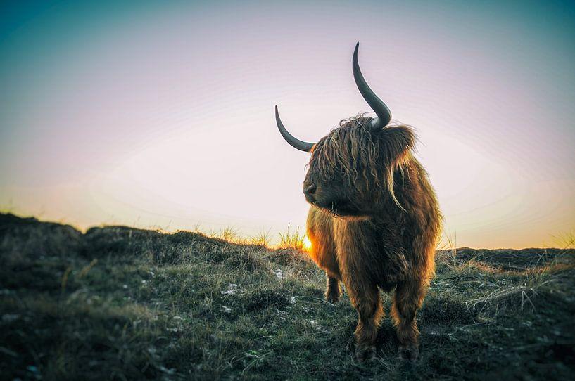 Highlander écossais sur Stefan Witte