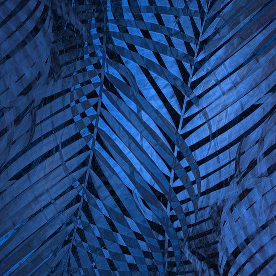TROPICAL NEBULAS BLUE LEAVES-B