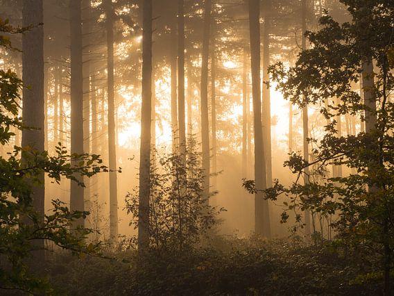 Gouden bos van Joyce Roth