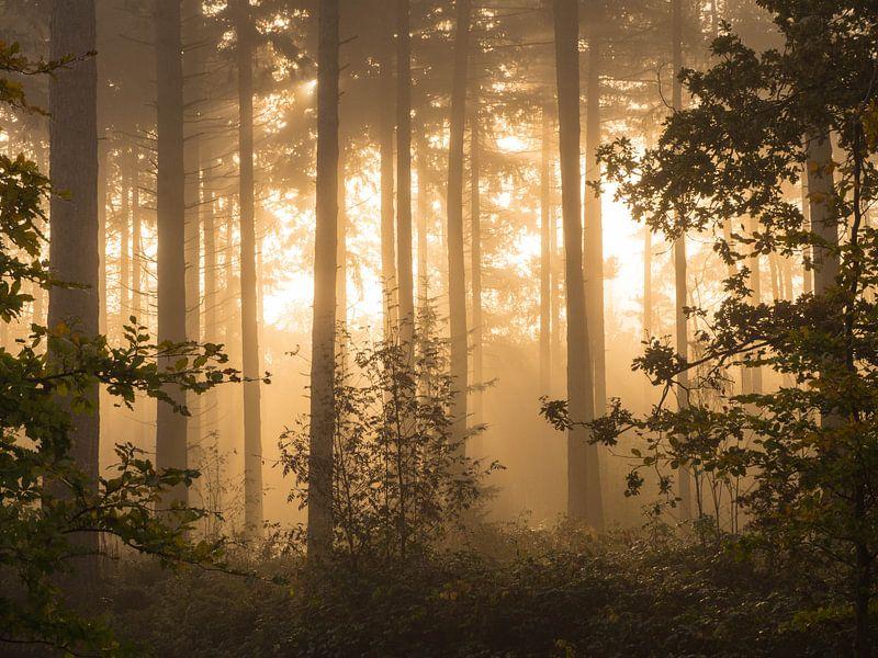 Gouden bos