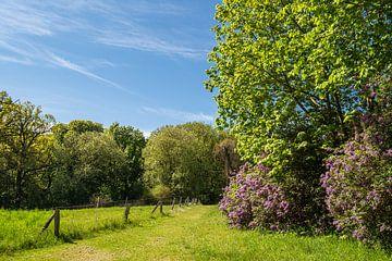 Landschap met veld en bomen in de buurt van Kuchelmiß van Rico Ködder