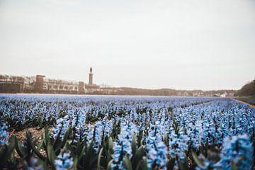 Blumenfeld Noordwijkerhout Leeuwenhorst von Sanne Dost