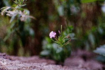 Flowers van