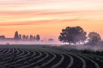 Sonnenaufgang über den Feldern von Tania Perneel