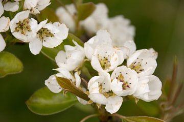 Blüte von Adri Vollenhouw