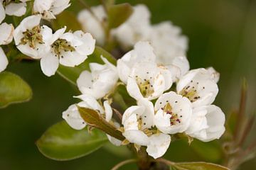 efflorescence sur Adri Vollenhouw