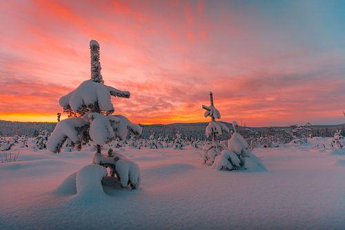 Zweden zonsondergang in winter 3