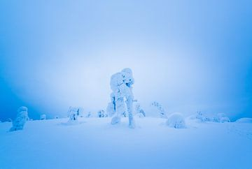 Sneeuwwerelden van Denis Feiner