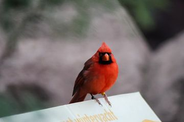 tropische rode vogel van kirsten propitius