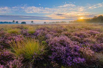 Sonnenaufgang Strabrechtse Heide von