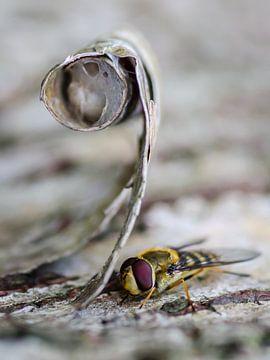 Wonderlijke natuur von Martzen Fotografie