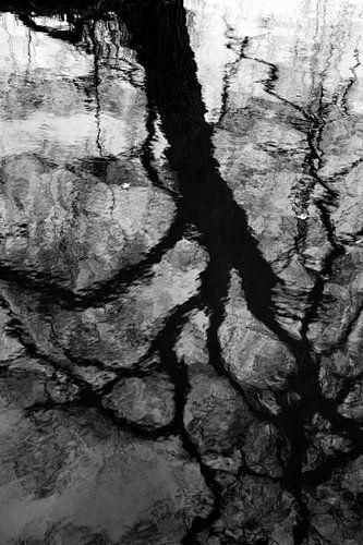 water tree van