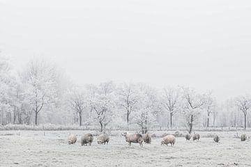 Schafe im Schnee von Jitske Cuperus-Walstra