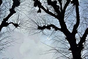 Bomen van Yolande Mulder