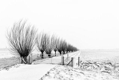 Rij wilgen in besneeuwd landschap