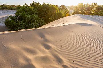 Rillen und Muster – Nationalpark De Loonse en Drunense Duinen sur Laura Vink